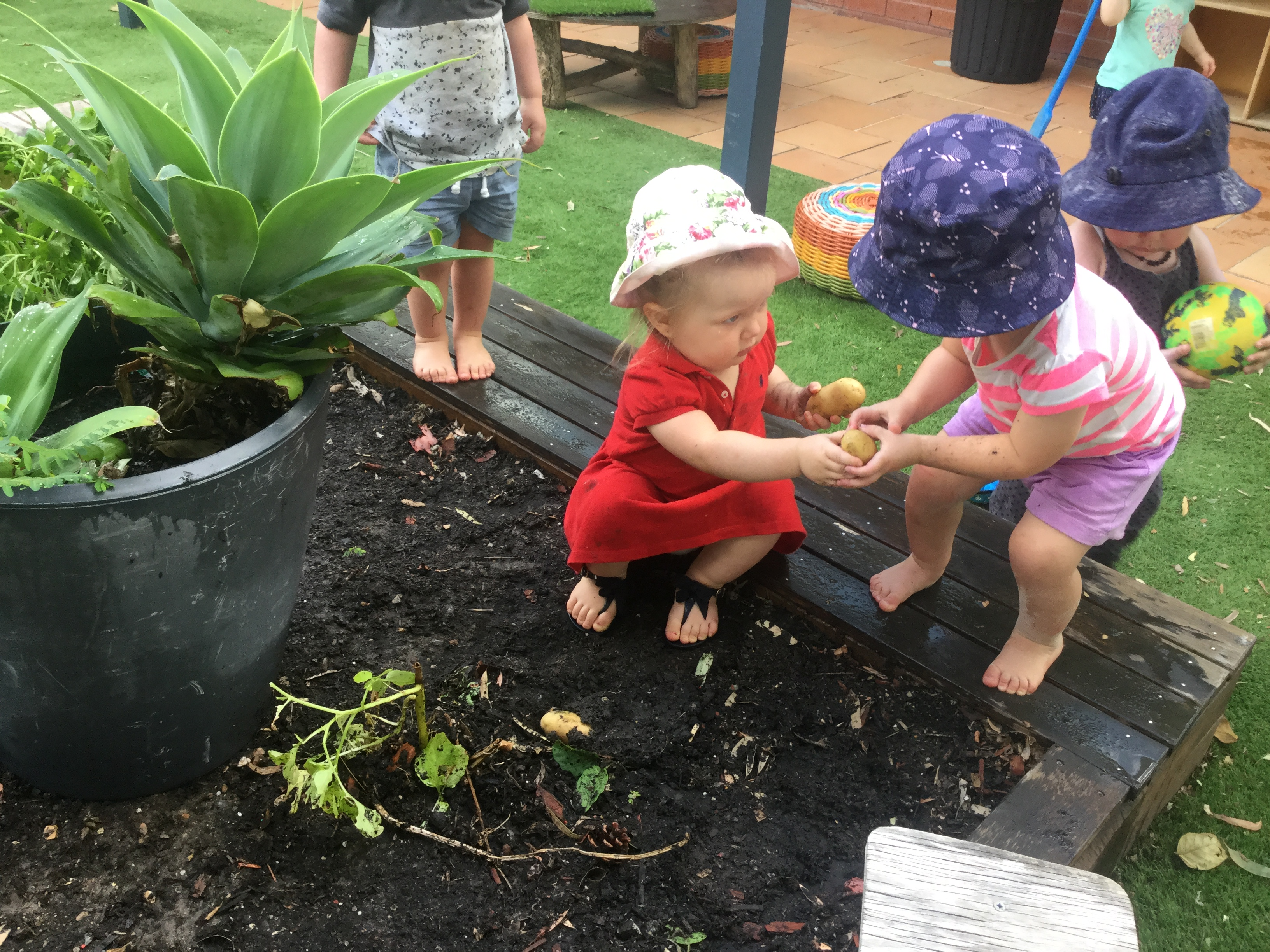 Sustainability at The Strawberry Bush